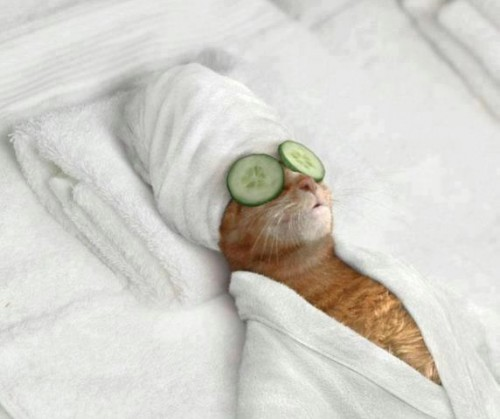 internet-meme-of-cat-at-spa-with-cucumbers-on eyes and wearing a bath robe